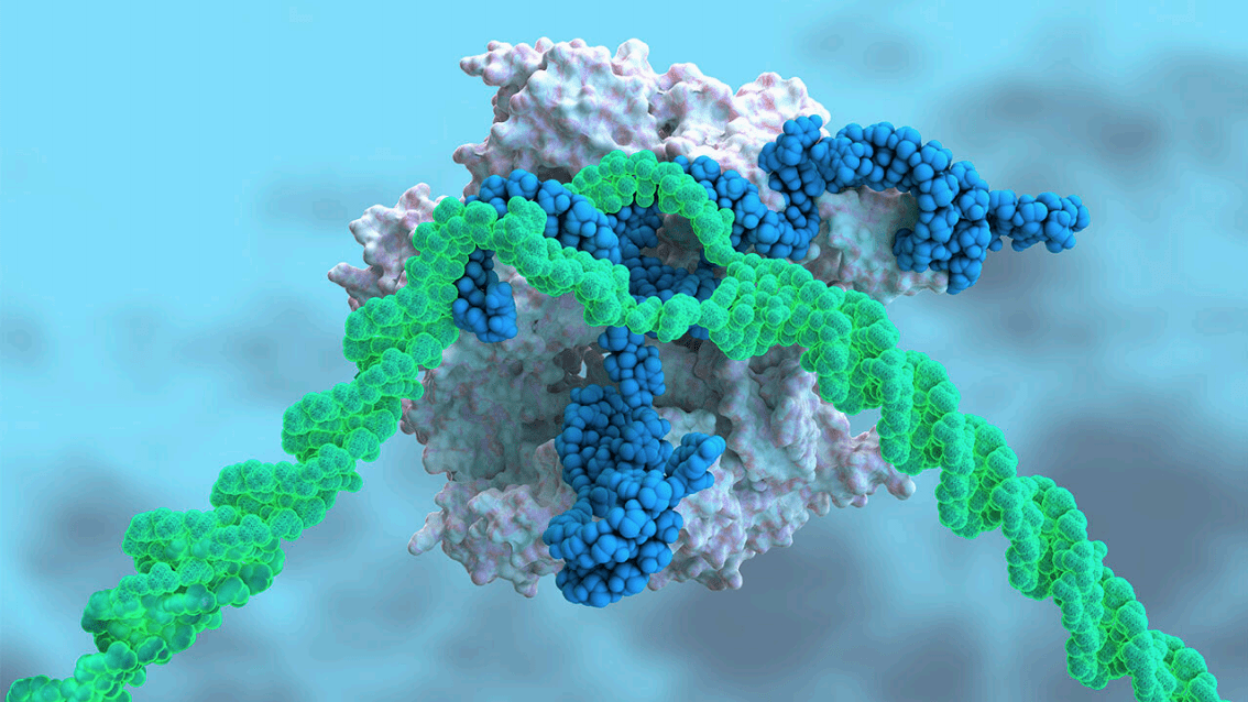 CRISPR Injected into the Blood Treats a Genetic Disease for First Time